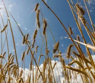 Rolniku nie przegap terminu składania wniosku o dopłaty