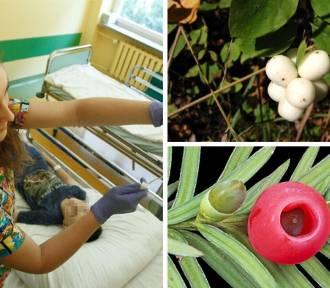 Uwaga na trujące rośliny! Na Śląsku dzieci trafiły do szpitala po ich zjedzeniu