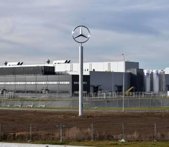 Mercedes zachęca uczniów do ochrony przyrody. Szczegóły konkursu Eko Gwiazda