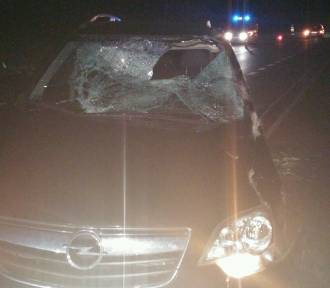 Łoś wbiegł pod koła samochodu. Kierowca trafił do szpitala [ZDJĘCIA]