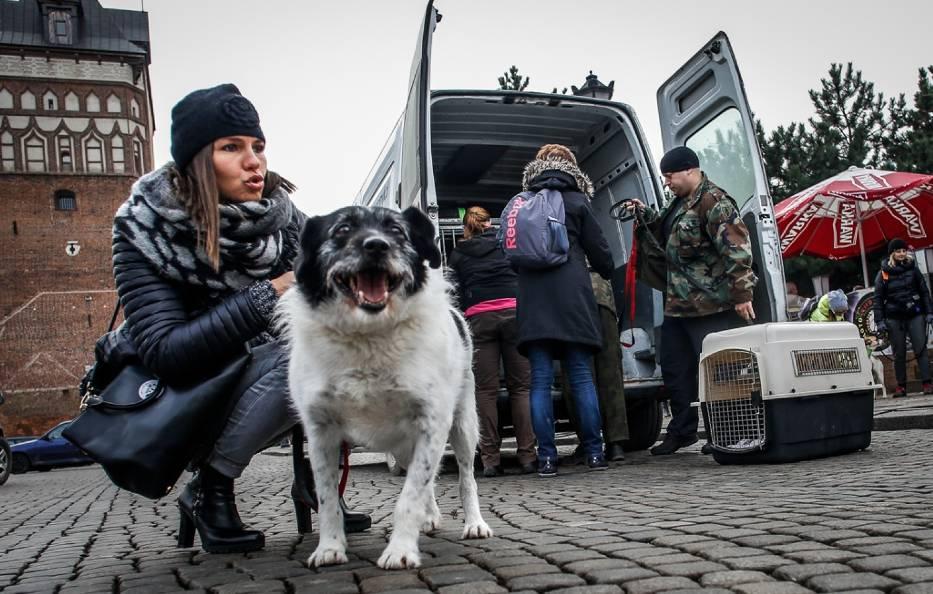 Spacer psów z opiekunami po Długim Targu w Gdańsku
