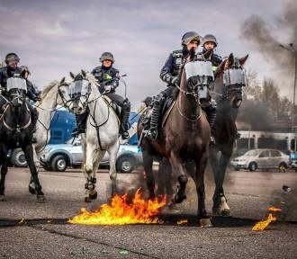 Policyjne konie ze Smardzewic koło Tomaszowa pomyślnie przeszły atestację [ZDJĘCIA]