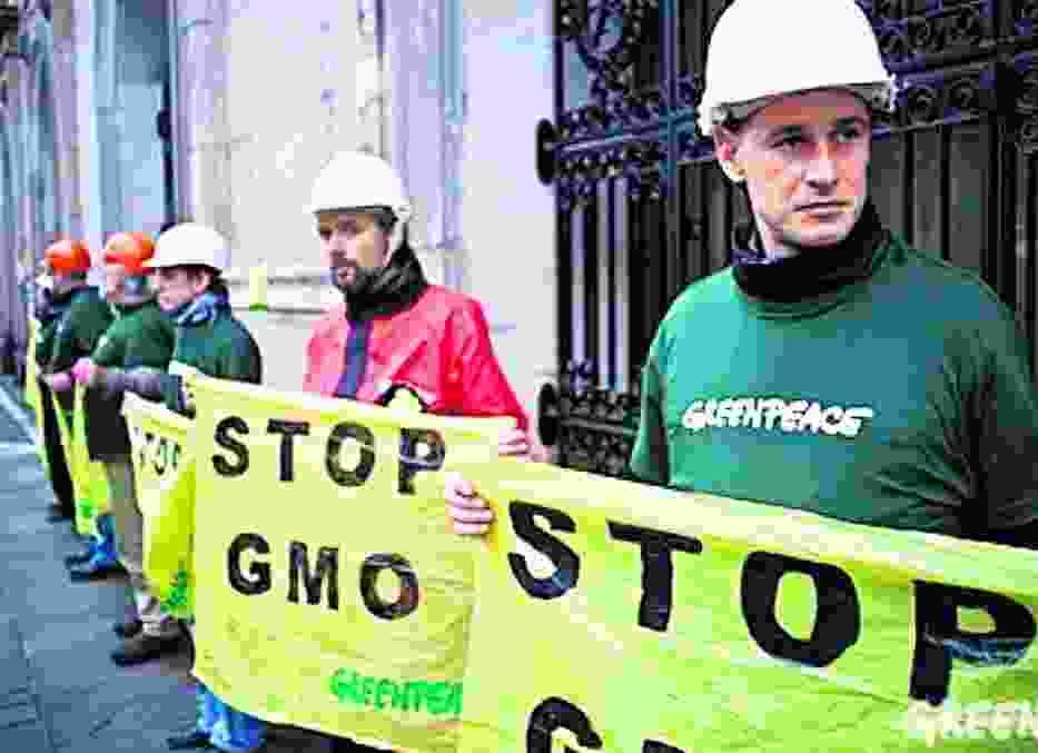 Ekolodzy nie chcą upraw modyfikowanej kukurydzy