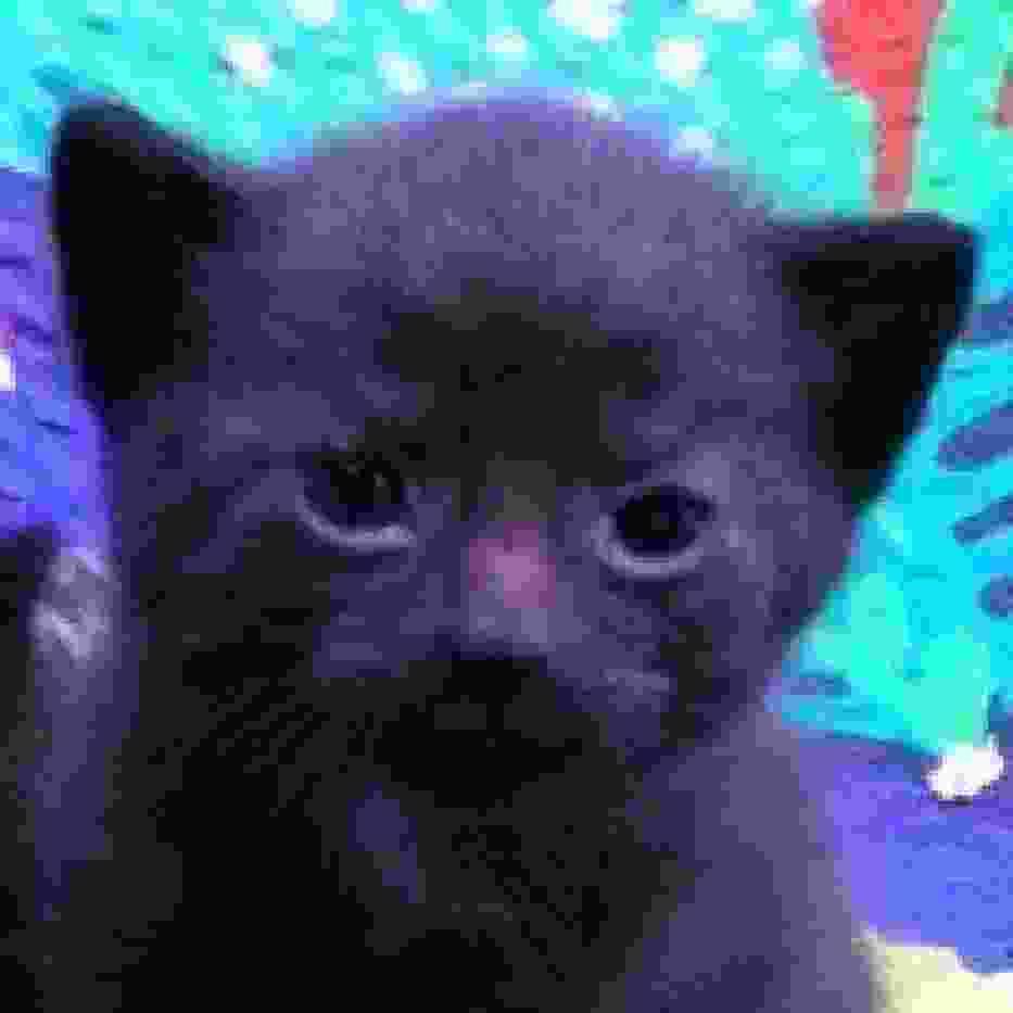 To nie jest Zefirynka, czyli kot, który połknął smoczek