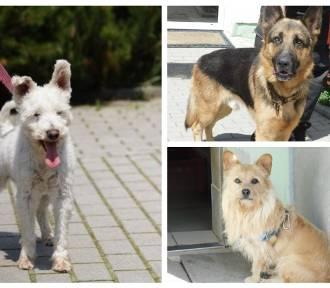 Wspaniałe psy do adopcji! Czekają w schronisku na nowy dom. Zobacz ZDJĘCIA
