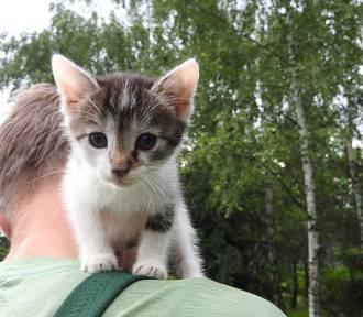Te koty szukają domu. Możecie je adoptować (ZDJĘCIA)