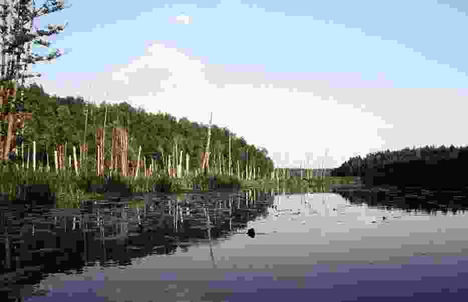 Rospuda pomiędzy Jeziorem Okrągłym a Sumowo Bakałarzewskie, koło wsi Kotowina