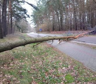 Silny wiatr powoduje szkody. Poranne interwencje OSP