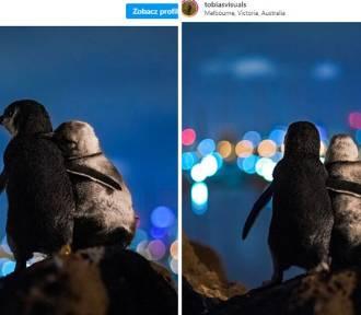 To nie fotomontaż. Przytulone pingwiny podbiły Internet