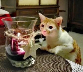 Światowy Dzień Kota. Stwórzmy kocią galerię!