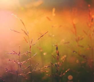 Pogoda w woj. lubelskim. Wtorek zapowiada się słoneczny. Ile wskażą termometry? (WIDEO)