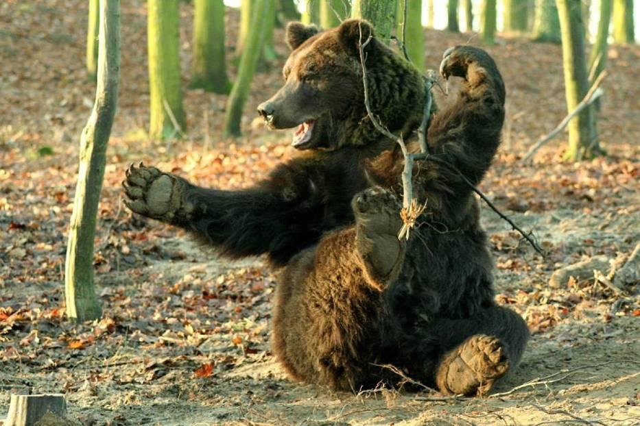Niedźwiedzie w Nowym Zoo
