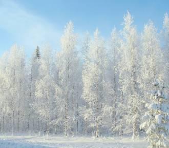 Jaka będzie zima? Mroźna czy łagodna? Zobacz prognozy!