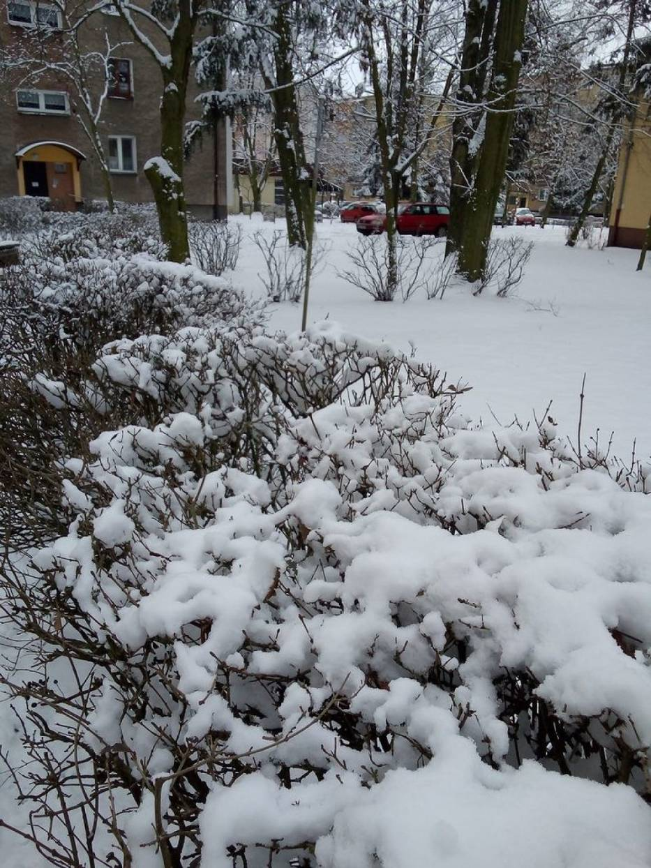 Zima w Wolsztynie