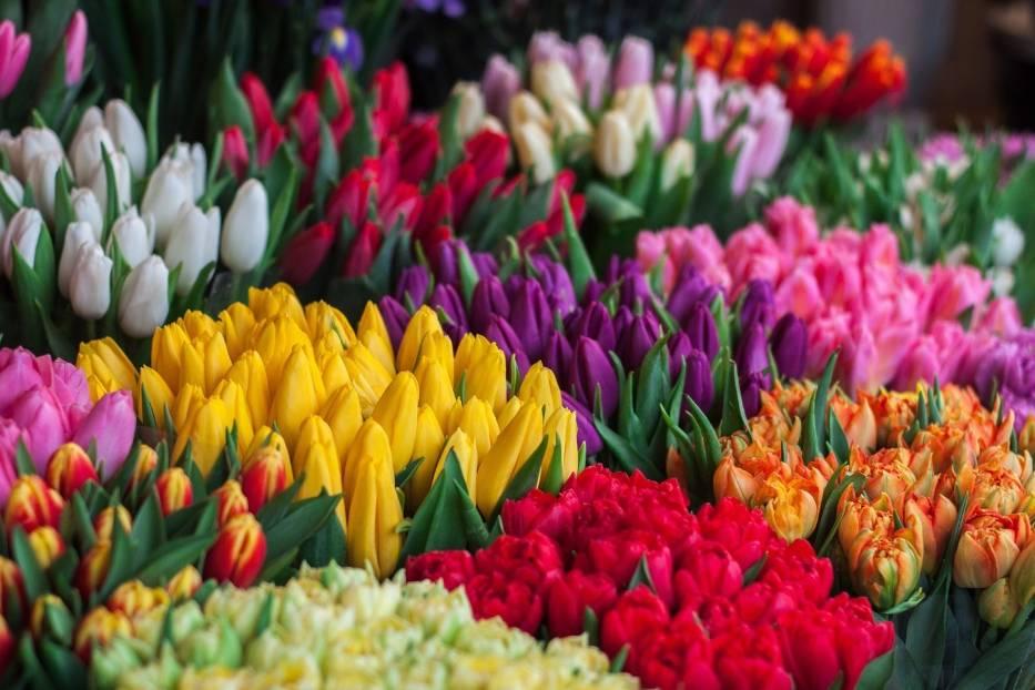 Kolory kwiatów mają znaczenie