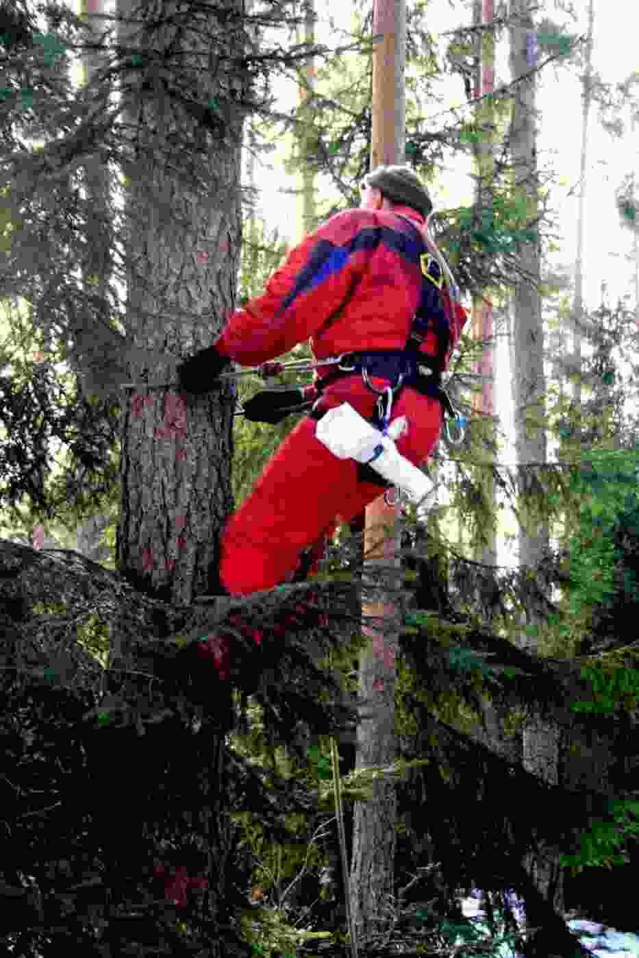 Aby wspiąć się na drzewo należy wyposażyć się w odpowiednie narzędzia, strój oraz zdobyć uprawnienia do pracy o charakterze alpinisty