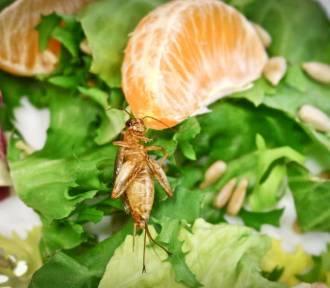 Świerszcze w czekoladzie i pieczywo z insektów. W Kauflandzie kupimy żywność z owadów!