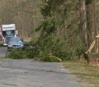 Wieje silny wiatr! Drzewo spadło na auto z niepełnosprawnymi