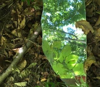Lubisz trójmiejskie lasy? Pomóż o nie zadbać