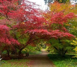 Jesienny wypad w Łódzkiem. Najpiękniejsze widoki są teraz w Arboretum [ZDJĘCIA]