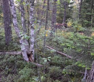 Lasy w Przemyślu i okolicach. Jak wypadamy na tle Podkarpacia [RANKING]