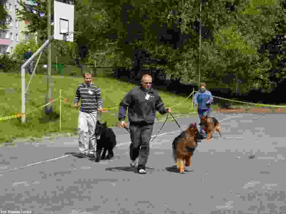 Wystawa psów rasowych w ramach pikniku samorządowego