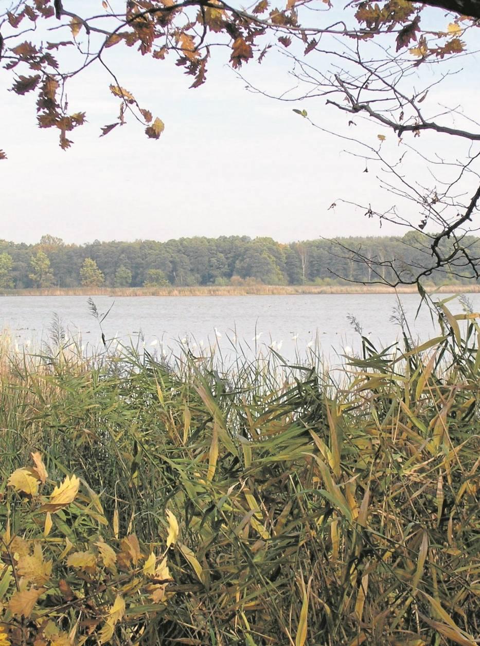 Rezerwat Przyrody Łężczok - jedna z przyrodniczych pereł  Śląska
