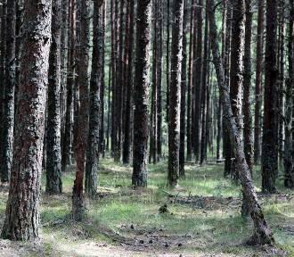 Dopłaty do zalesiania. Rolnicy mogą składać wnioski