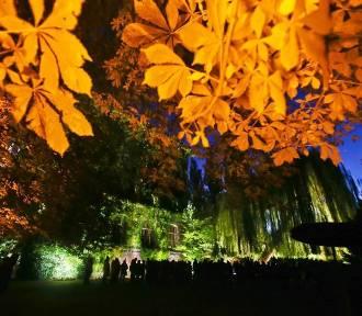 Pokazy iluminacji w Ogrodzie Botanicznym [ZDJĘCIA]
