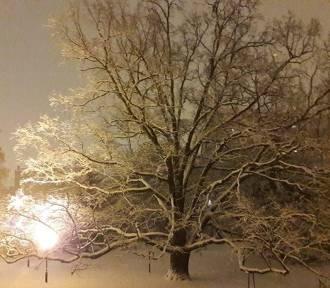 Toruń w zimowej oprawie. Galeria zdjęć Czytelników
