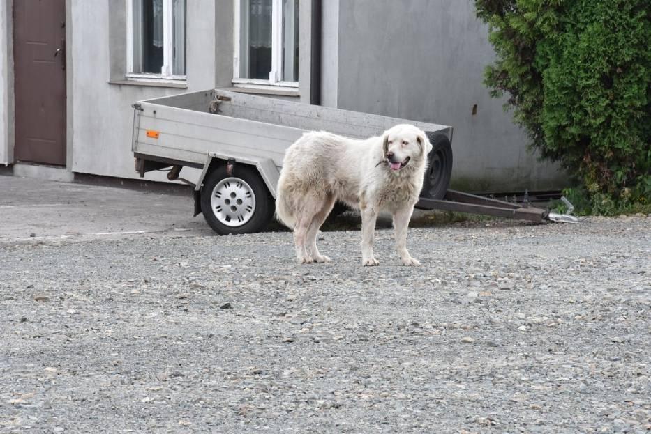 Losem tego psa przejęło się wiele osób. Co u Muchy? Sprawdziliśmy
