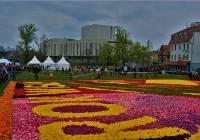 Dywany Kwiatowe Bydgoszcz Naszemiastopl