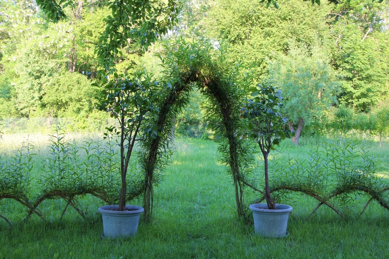 Elementy małej architektury można wykonać z żywych roślin