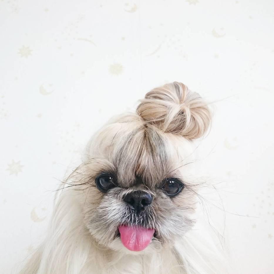 Ten pies ma lepszą fryzurę niż ty! Zobacz niesamowite stylizacje pupila [GALERIA]
