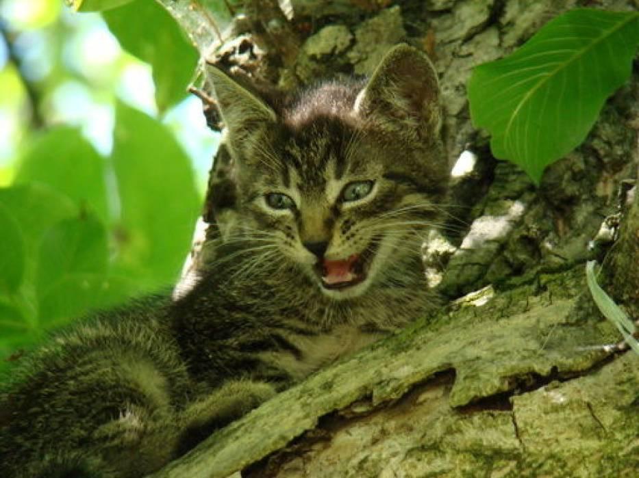 Kotek działkowy