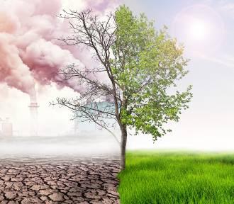 Czy globalne ocieplenie  to bujda? Rozwiewamy mity