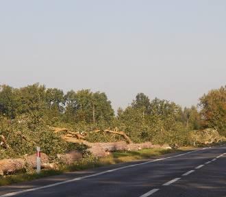 Wycinka drzew na drodze ze Słupska do Ustki [ZDJĘCIA]