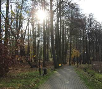 Ostatni moment na spacer po parku w Mikołowie [ZDJĘCIA]