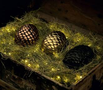 Wrocław. Chcesz potrzymać w rękach smocze jaja? Przyjdź do Zajezdni (SZCZEGÓŁY)