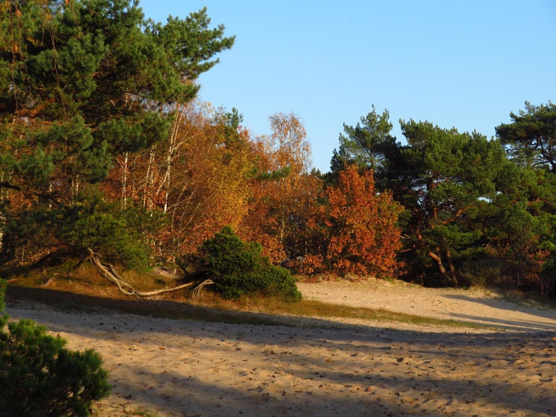 Złota jesień w usteckich parkach