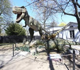 Kraków. Podróż w czasie do krainy dinozaurów