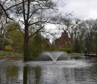 Zachęcamy do wiosennych spacerów po starogardzkim parku