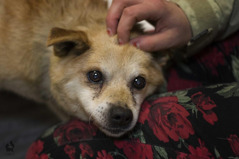 Pieski do adopcji w Krakowie