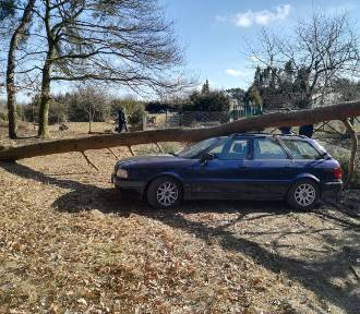 Debrzno. Drzewo spadło na samochód - w środku były dwie osoby