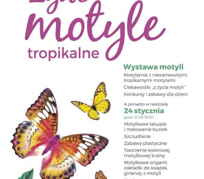 Wystawa żywe Motyle Tropikalne Galeria Wisła Płock