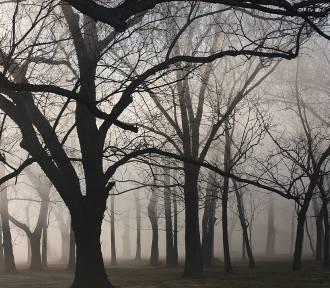 Pogoda w woj. lubelskim. Sprawdź prognozę na wtorek (WIDEO)