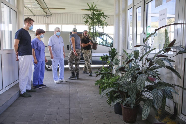 Legnicki szpital jak gęsta dżungla. Dziesiątki nowych roślin na korytarzach
