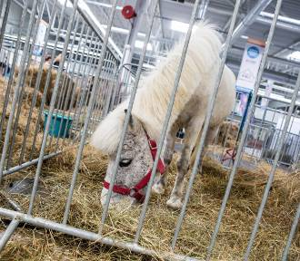 Animals' Days, Warszawa 2020. Zwierzaki, żywność, akcesoria dla nich i spotkania edukacyjne