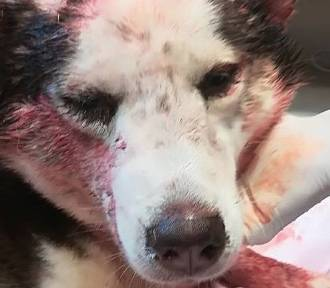 Sędzia uzasadnia w sprawie bestialskiego pobicia psa