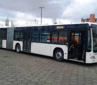 Autobus przegubowy jest testowany na grudziądzkich ulicach